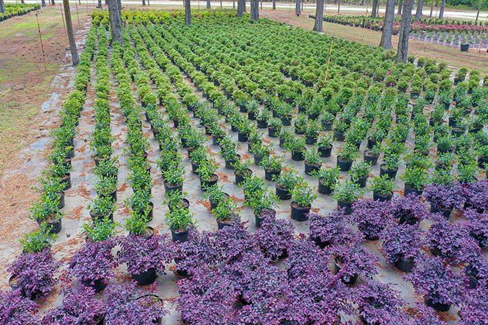 Elliott's Nursery | Kershaw, SC | potted plants for sale