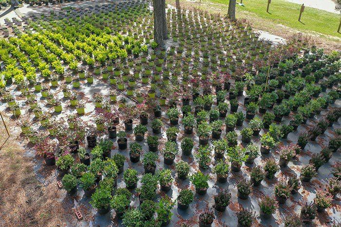 Elliott's Nursery   Kershaw, SC   plants in the nursery