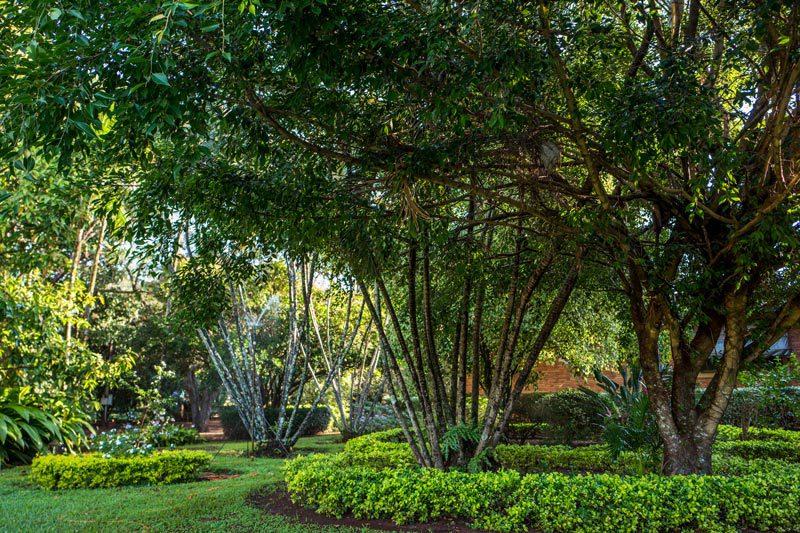 Elliott's Nursery | Kershaw, SC | landscaping services