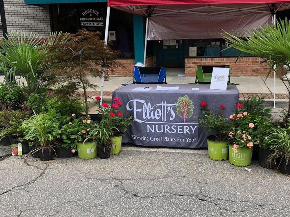 Elliott's Nursery | Kershaw, SC | retail plants for sale